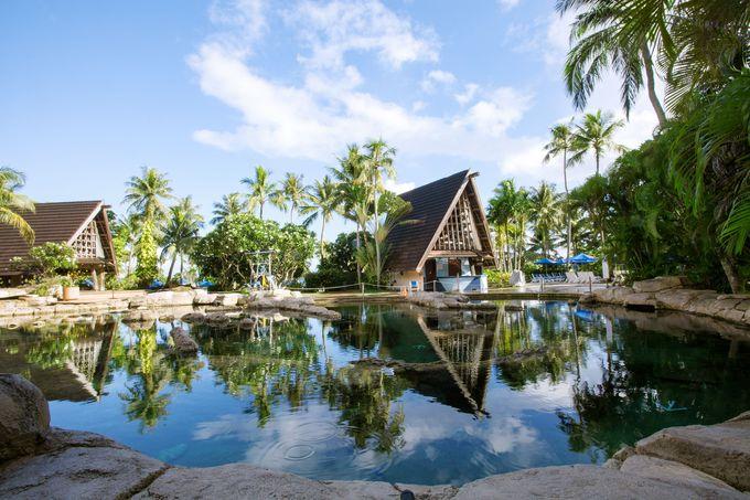 世界でも珍しい「泳げる水族館」