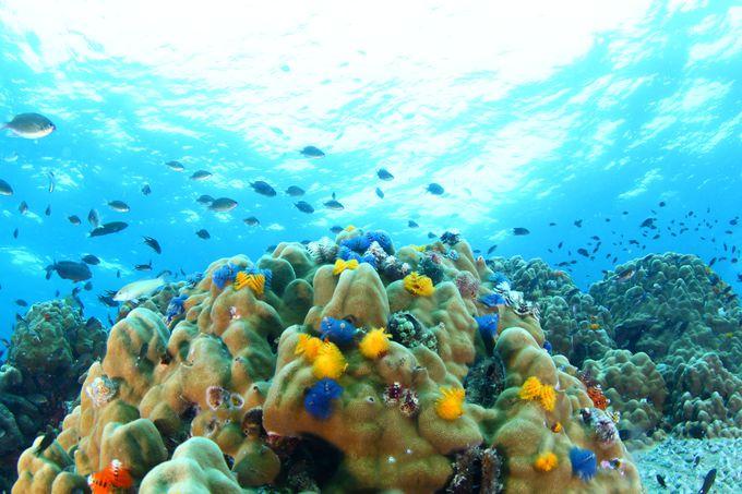 タオ島でのダイビングをおすすめする理由