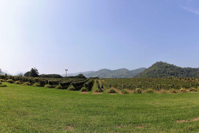 カオヤイワインの発祥の地「PBVALLEY」