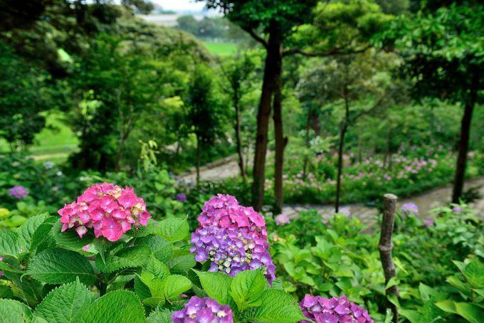 参道を登り丘の上からの風景を楽しむ