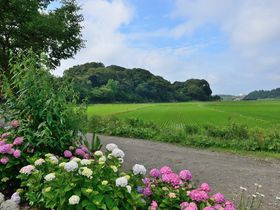 あじさいと田園風景が美しい穴場スポット「二本松寺」茨城県潮来市|茨城県|トラベルjp<たびねす>