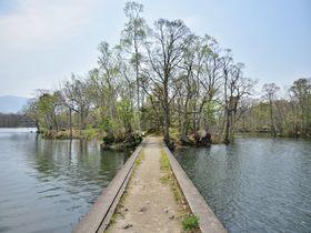 北海道・大沼公園 大沼湖畔遊歩道「島巡りの路」を歩こう