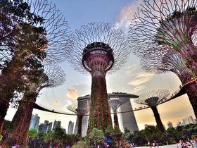木の上にあるレストラン!?シンガポール「スーパーツリー・バイ・インドシン」