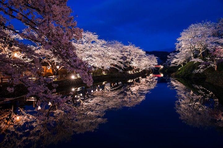 城のお堀に映し出される夜桜は必見