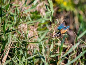 ラムサール条約登録の広大な湿地帯公園・米子水鳥公園|鳥取県|トラベルjp<たびねす>