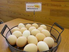 売切れ必至のスイーツ&たまご!鳥取・大山麓「風見鶏」はサクサクシューが人気|鳥取県|トラベルjp<たびねす>