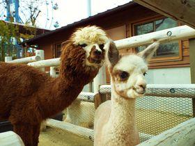 癒しの動物に会おう!宇部市「ときわ動物園」で親子のひと時を|山口県|トラベルjp<たびねす>