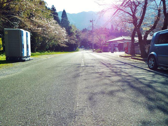 登る途中に有名なミステリースポット!春には桜並木も堪能