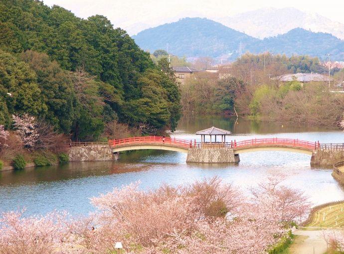 ひと気のない山から桜堤を俯瞰