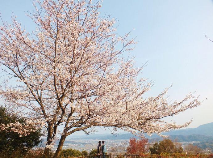 巨大自動万華鏡のある徳島市一の絶景・眉山と城壁の桜