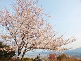 巨大自動万華鏡のある徳島市一の絶景・眉山と城壁の桜|徳島県|トラベルjp<たびねす>