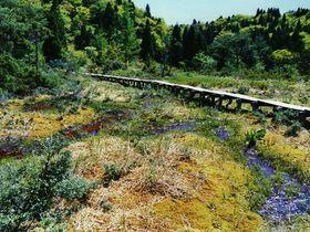 大津市・神秘の高層湿原「八雲ヶ原」と豪快滝群の沢登り「神爾谷」|滋賀県|トラベルjp<たびねす>