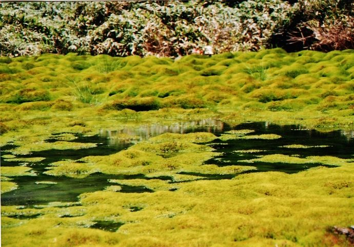 様相が異なる晴天日の湿原