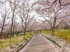 高松市一の絶景「峰山公園の桜」とミシュラン三ツ星庭園「栗林公園の桜」