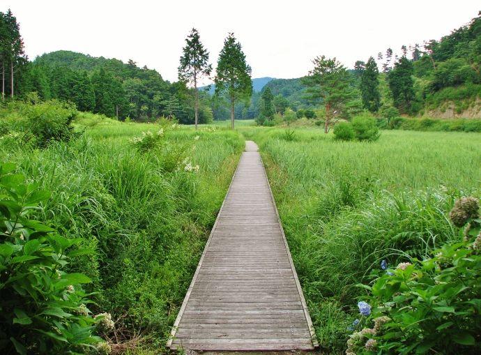 サギソウ乱舞「四国の尾瀬」徳島・黒沢湿原