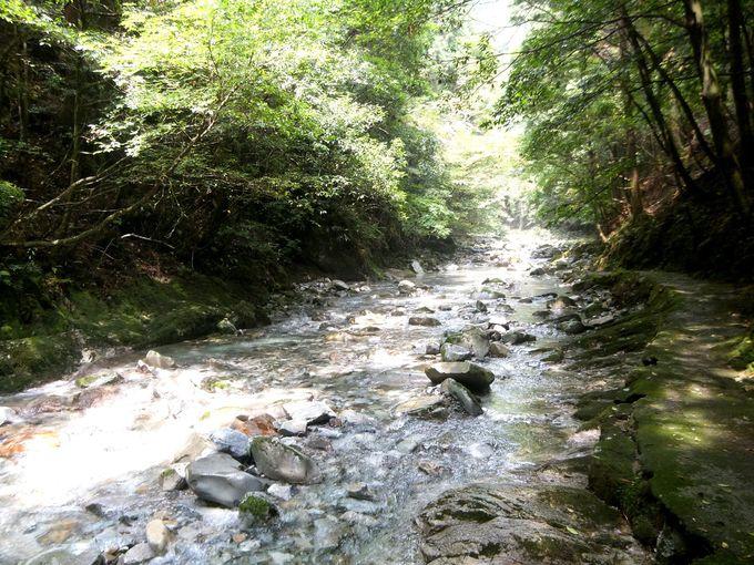 自然に癒されたいなら、風光明媚な古座川へ!