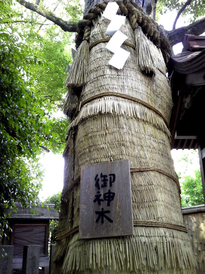 神霊が宿る、楠の御神木でエネルギーチャージ!