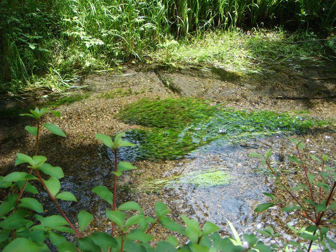 「雲場池」は湧き水の池!