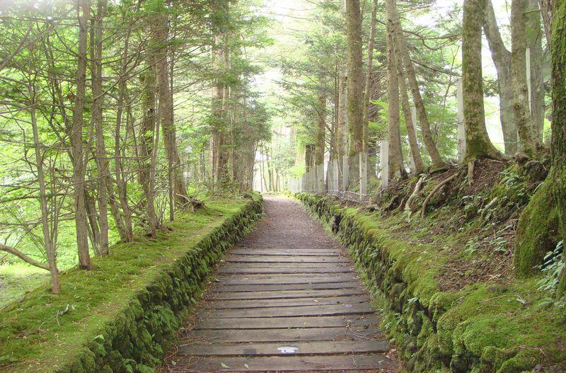 散歩が楽しくて何度でも行きたくなる!軽井沢の自然に魅せられて
