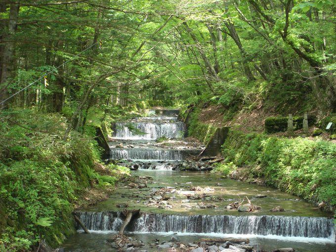 緑と白のコントラストが美しい川の風景
