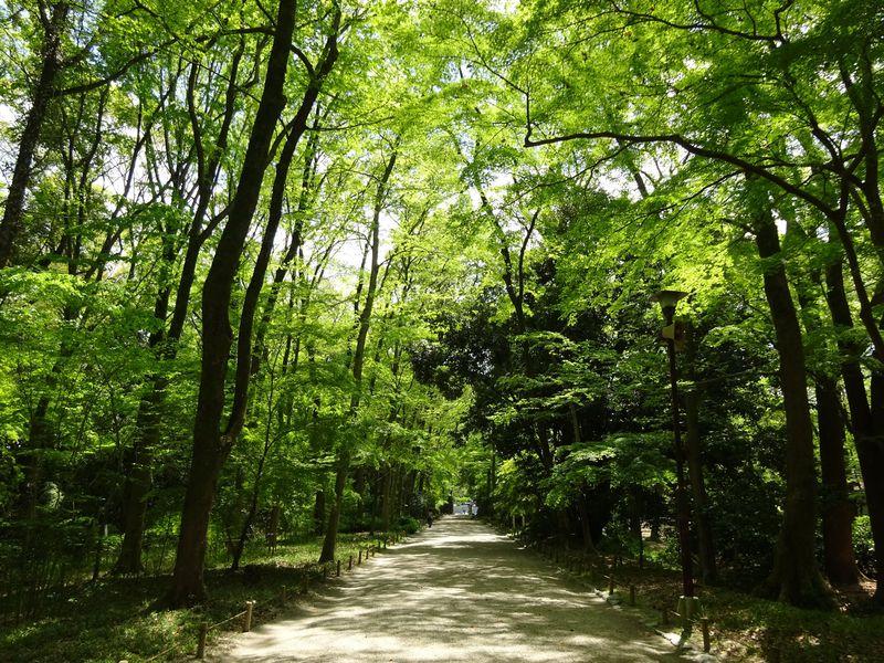 京都の癒しスポット!「糺の森」は下鴨神社参道に広がる太古の森