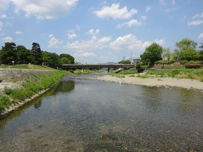 高野川沿いには京都の穴場的なお花見スポットが!