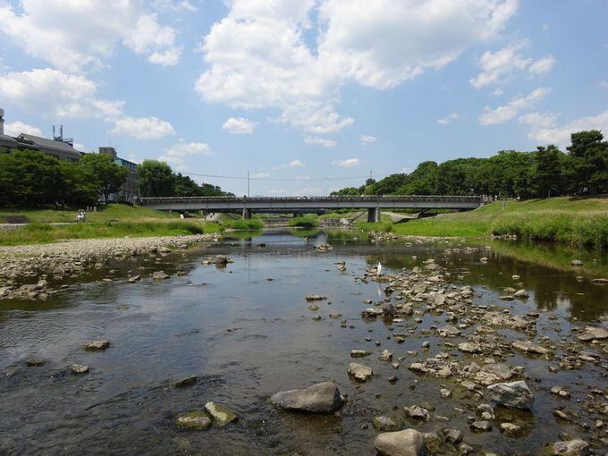 賀茂川の上流には世界遺産と枝垂れ桜の名所が!