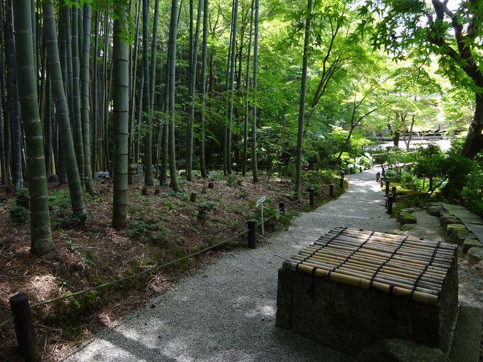 円山応挙が歩いた美しい竹林も必見!十牛之庭を回遊してみよう