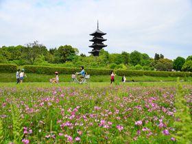 れんげまつりへGO!岡山・吉備路自転車道で気分爽快サイクリング|岡山県|トラベルjp<たびねす>
