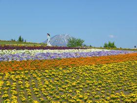 日本最大級の植物園!春の「とっとり花回廊」へ行こう
