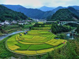 日本の棚田百選・和歌山県「あらぎ島」の景観がスゴイ!|和歌山県|トラベルjp<たびねす>