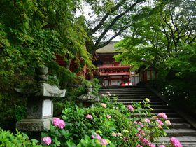 約1000株のあじさいが咲く「奈良県・談山神社」は新緑のパワースポット|奈良県|トラベルjp<たびねす>