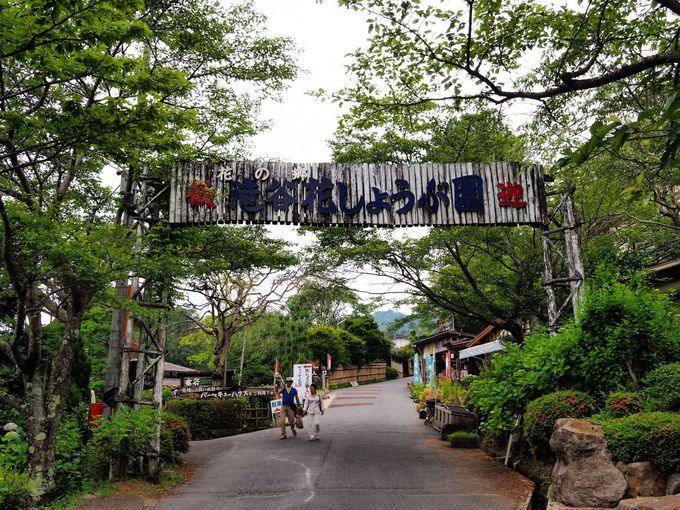 「村おこし」で誕生した花菖蒲園