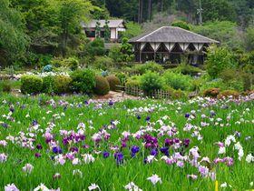 約100万本の花菖蒲が咲き誇る!奈良「花の郷 滝谷花しょうぶ園」で初夏を満喫|奈良県|トラベルjp<たびねす>