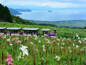 滋賀・天空の「びわこ箱館山ゆり園」で250万輪のゆりと眺望を満喫