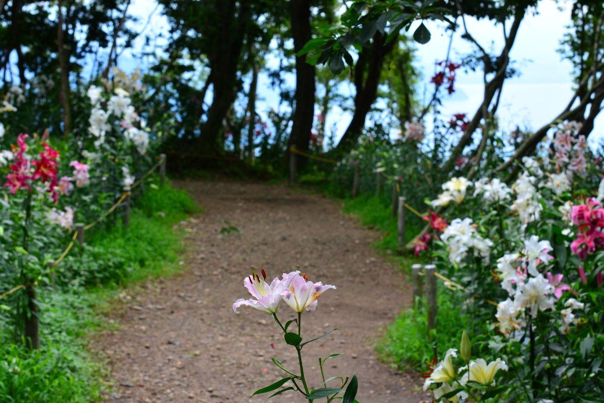 涼を感じる散策路「森のゆり道」