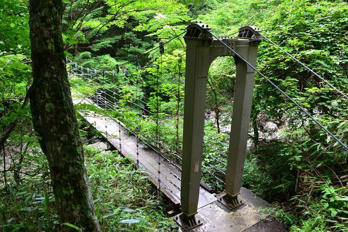 東大台ケ原自然観察路を歩こう