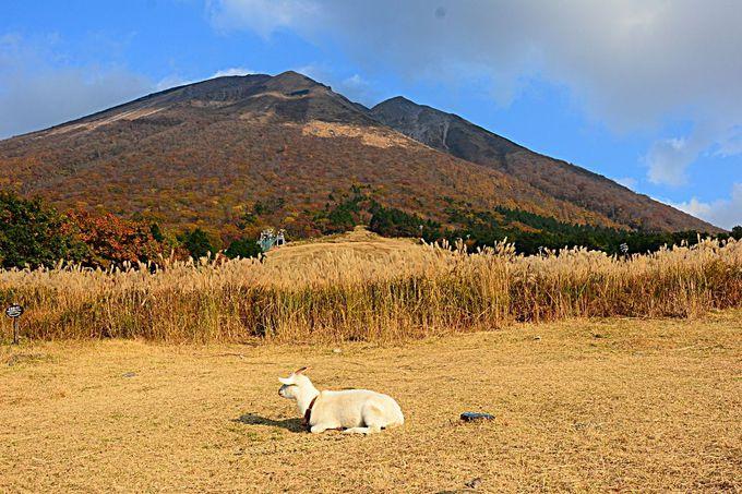 恋人の聖地がある大山桝水高原「天空リフト」