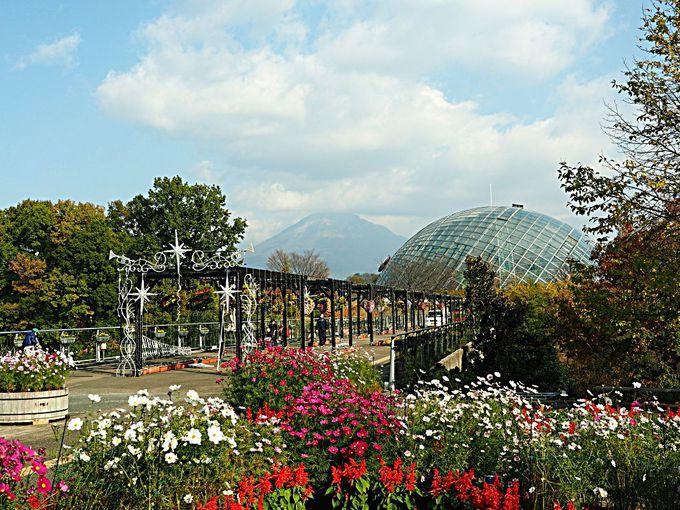 サルビアの絨毯と大山の眺望が楽しめる「とっとり花回廊」