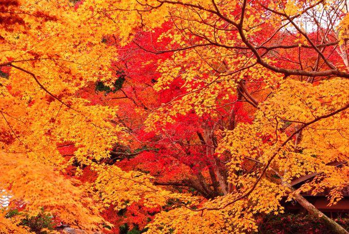 大阪・泉州一の紅葉の名所 渓流めぐりも楽しい「牛滝山大威徳寺」