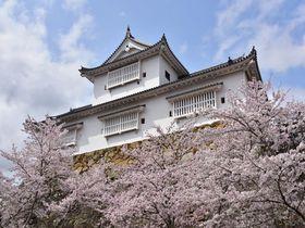まるで桜のテーマパーク!岡山県「津山さくらまつり」へ行こう