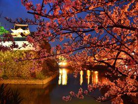 """春爛漫!大阪・泉州の桜の名所""""岸和田城""""「お城まつり」に行こう"""