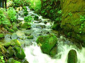 奥入瀬渓流を2時間半で満喫!見どころ凝縮おすすめコース|青森県|トラベルjp<たびねす>