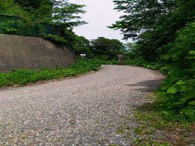 林道マニアにお勧めしたい!世界遺産・白神山地のマザーツリー詣で|青森県|トラベルjp<たびねす>