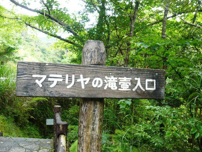 気分はジャングル探検隊!