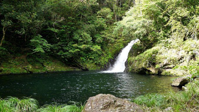 明るく輝く滝壺で、泳いでみる?