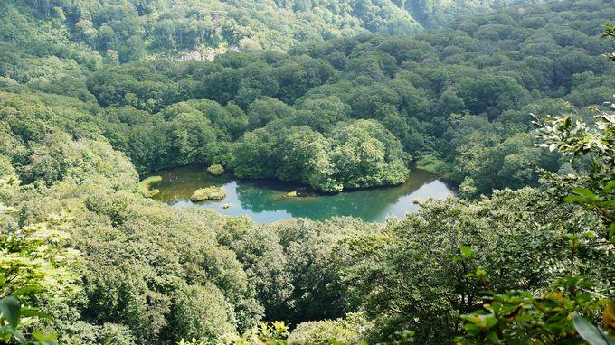 樹海にたたずむ神秘の池の悲恋物語「黒百合姫伝説」