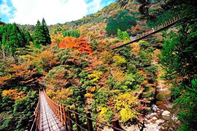 「しゃくなげ橋」違ったアングルから楽しむ絶景