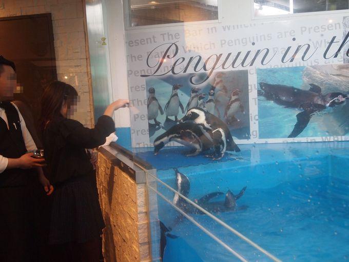 ペンギンの体調に合わせて餌やりタイムも!