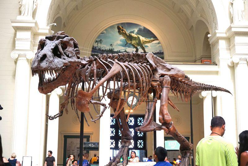 世界最大級の恐竜と出会える!シカゴ「フィールド自然博物館」